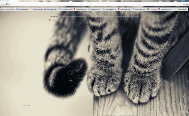 cat google chrome theme min