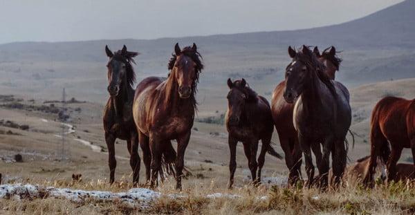 Number of bones in Horses