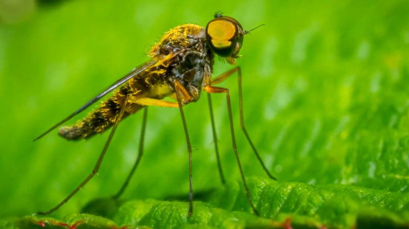 best pest control service in usa