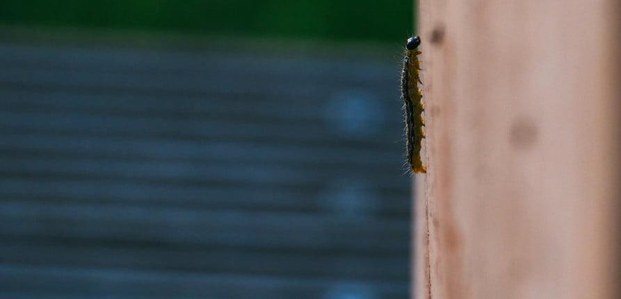 tips to remove termites
