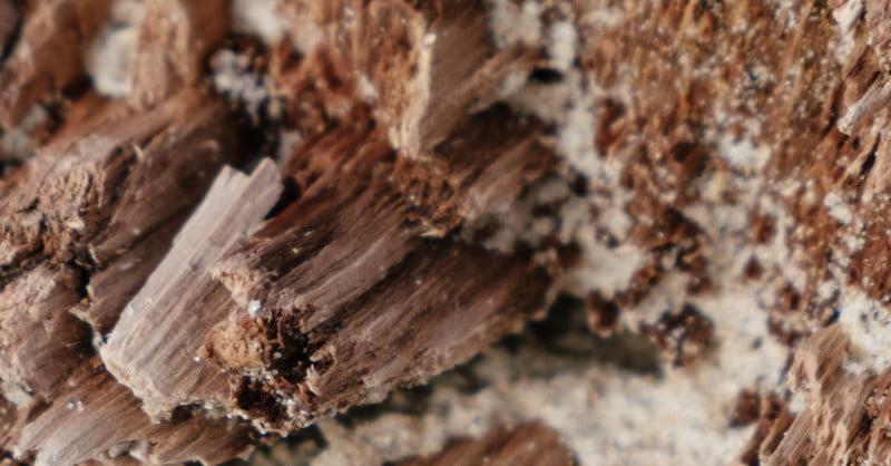 how to remove Termites