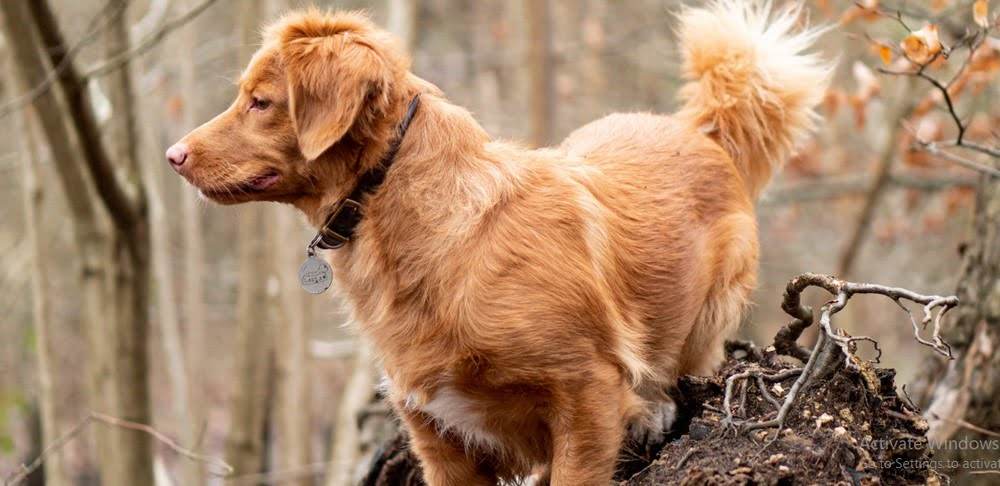 Best GPS Tracker For Pets