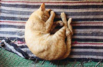 How Much do Cats Sleep